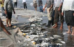 صید ماهی استخوانی
