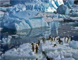 احداث بزرگترین زیستگاه حفاظت شده دریایی جهان
