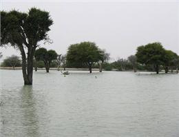 احیای جنگل های حرا در خلیج گواتر با همکاری پاکستان