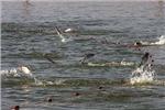 صید ماهی شوریده