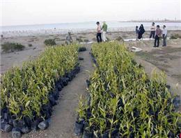 آغاز ساخت موزه جنگل دریایی حرا در قشم
