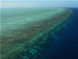 آغاز پایش مرجان های خلیج فارس و دریای عمان