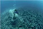 آلودگی اقیانوس